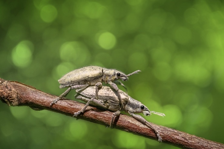bug-1121263_1920